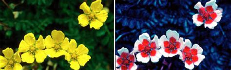 are bees color blind the stochastic scientist flower color is shaped by bees