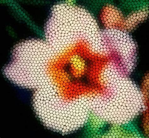 are bees color blind bees the key to flower colour evolution monash