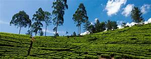 Sri Lanka Immobilien : agence de voyage au sri lanka tracedirecte ~ Markanthonyermac.com Haus und Dekorationen