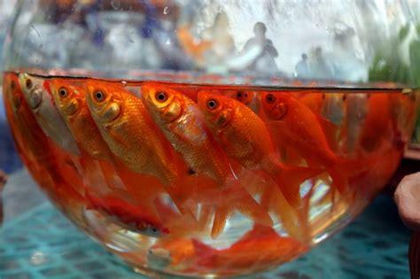 probleme poisson