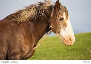 Grundstück Kaufen Was Ist Zu Beachten : mustang pferd kaufen auto bild idee ~ Markanthonyermac.com Haus und Dekorationen