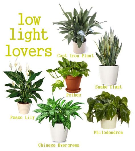indoor plants for the home low lights
