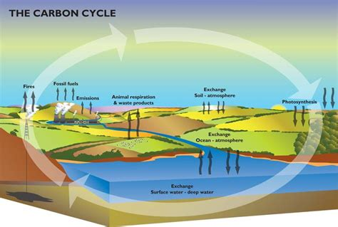 what s happening with the carbon cycle how we see the environment