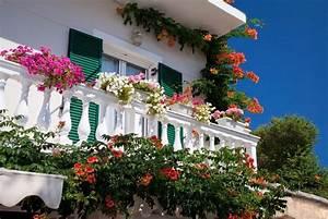 Die Schönsten Balkonpflanzen : die 11 sch nsten balkonpflanzen ~ Markanthonyermac.com Haus und Dekorationen