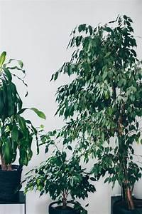 Große Zimmerpflanzen Pflegeleicht : der pflanzen guide 15 stylische und pflegeleichte zimmerpflanzen ~ Markanthonyermac.com Haus und Dekorationen