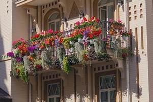 Die Schönsten Balkonpflanzen : balkonpflanzen die sch nsten ideen zur balkongestaltung ~ Markanthonyermac.com Haus und Dekorationen
