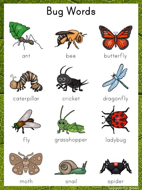 88 Best Images About School Butterfliesinsects On Pinterest  Hidden Pictures, Student And Ants