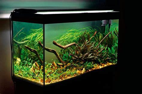 carbon in the planted aquarium gas vs liquid practical fishkeeping magazine