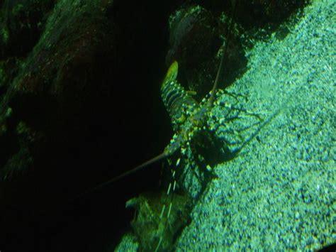 aquarium ile de la r 233 union picture of aquarium de la reunion gilles les bains