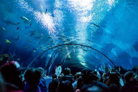 top 11 des plus grands aquariums du monde les balades sous marines topito