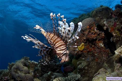 3d Under The Sea Wallpaper Wallpapersafari