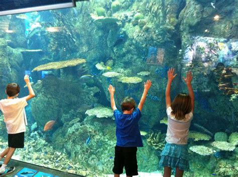 orange county giveaway aquarium of the pacific moompetam festival