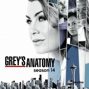 Grey's Anatomy, Season 14 (subtitled) on iTunes