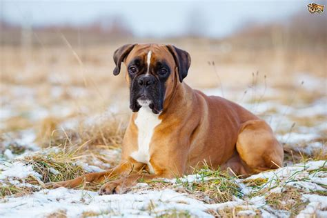 The Top Ten Most Popular Registered Dog Breeds In The Uk
