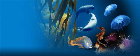 oceanopolis the discovery park in brest finistere britanny