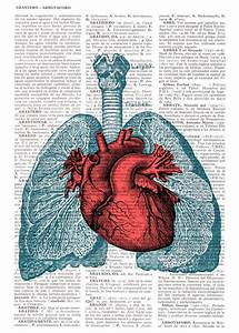 Heart and Lungs Anatomy book page Print on Vintage ...