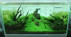 Coole Aquarium Deko : japanische deko idee aquarium takashi amano aquarium pinterest aquarium nature aquarium ~ Markanthonyermac.com Haus und Dekorationen