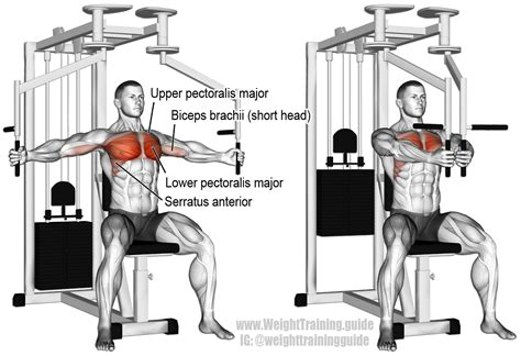 machine fly an isolation push exercise muscles worked