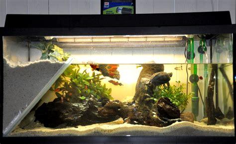 les plantes sans danger pour les tortues d eau liste animogen