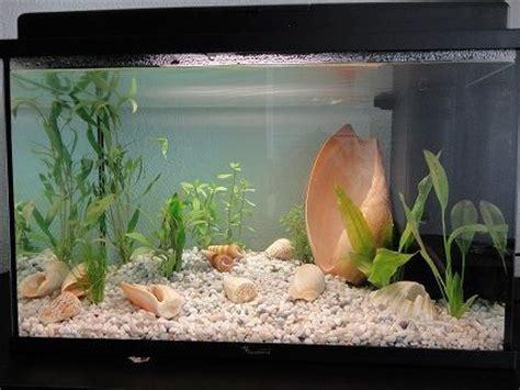 population d un aquarium de 60 litre forum aquarium
