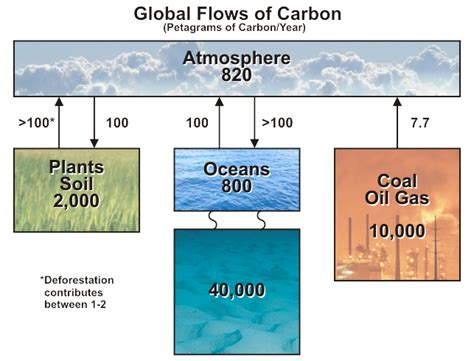what is the carbon cycle what is the science it united states carbon cycle science