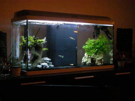aquarium eau douce tortue
