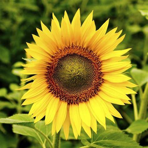 fleur 224 planter en automne liste ooreka