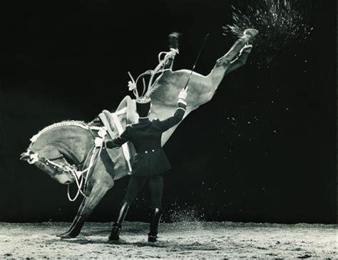 le cadre noir de saumur luxury equestrian style