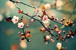 Garten Was Tun Im März : gartenarbeit im m rz das gartenmagazin ~ Markanthonyermac.com Haus und Dekorationen