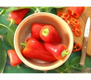 Paprika Pflanzen Pflege : spitzpaprika dehner garten center ~ Markanthonyermac.com Haus und Dekorationen