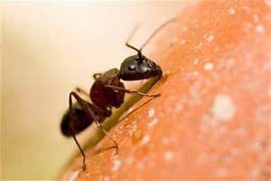 Was Hilft Gegen Fliegen Auf Der Terrasse : was hilft gegen ameisen im garten tipps ~ Markanthonyermac.com Haus und Dekorationen