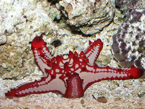 les 233 toiles de mer aquarium r 233 cifal aquarium marin aquarium eau de mer reefguardian