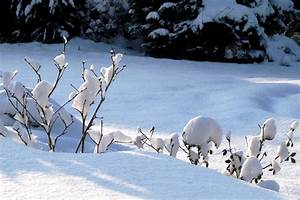 Was Wiegt Schnee : schwer wiegt der schnee foto bild jahreszeiten winter natur bilder auf fotocommunity ~ Whattoseeinmadrid.com Haus und Dekorationen