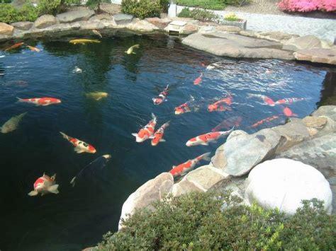 poisson qui meurt pourquoi aquariums et vivariums forum animaux