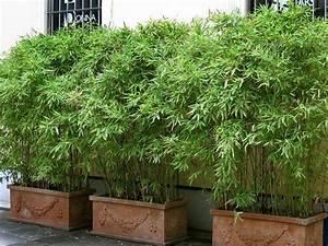 Gräser Kübel Terrasse : bambus im k bel kann eine terrasse im garten oder einen balkon mit einem lebendigen sichtschutz ~ Markanthonyermac.com Haus und Dekorationen