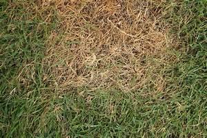 Alternative Zu Gras Garten : verbrannter rasen 4 tipps um ihren rasen zu retten plantura ~ Markanthonyermac.com Haus und Dekorationen