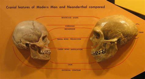 sapiens vs neanderthals