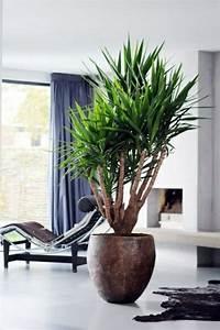 Pflanzen Für Wohnzimmer : palmlilie yucca wohnzimmer liege pelzteppich pflanzen und blumen pinterest html ~ Markanthonyermac.com Haus und Dekorationen