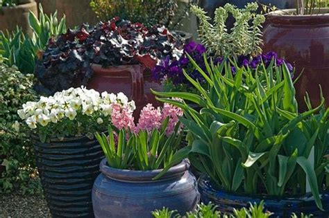 How To Get The Best From Your Container Plants  Rhs Gardening