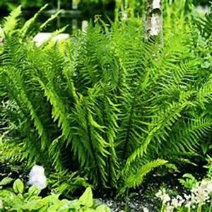 Baum Für Schattigen Vorgarten : palmlilie eine bezaubernde zier und nutzpflanze baum tropische pflanzen und pflanzen ~ Markanthonyermac.com Haus und Dekorationen