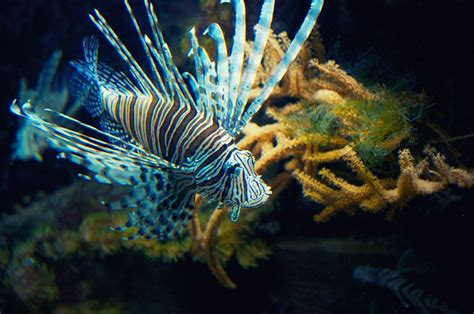 nausicaa l aquarium g 233 ant de boulogne sur mer