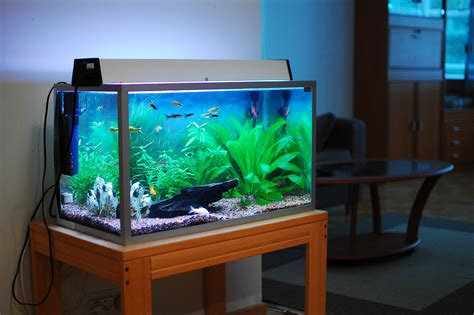 is a 40 litre fish tank a size aquatics world