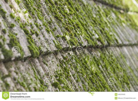 Moss On Old Roof Tiles Stock Image. Image Of Letters