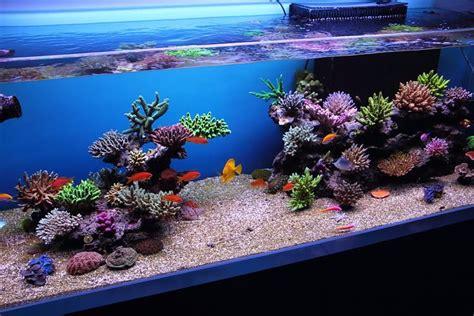 Top Reef Tank Aquascapes  Re Rsm 130d Top Aquascapesfts