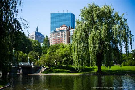 Swan Boats Boston Public Garden by Boston Public Garden Robert Gillis New England Photography