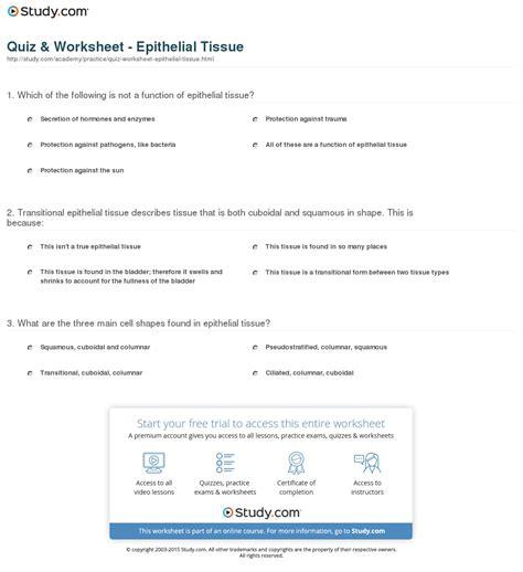 Quiz & Worksheet  Epithelial Tissue Studycom