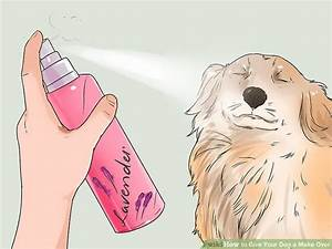 3 Ways to Give Your Dog a Make Over - wikiHow