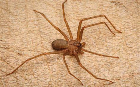 pourquoi les araign 233 es rentrent dans la maison