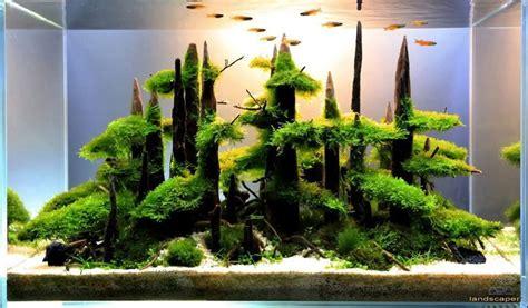 aquascaping les plus beaux aquariums