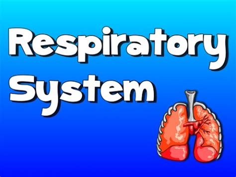 Respiratory System Song  Youtube. Where To Sell Engagement Rings. Quickbooks Merchant Processing. Information Asset Management. Free Parking Oakland Airport. Customer Appointment Manager Pro. Over The Counter Drug Abuse Video Wall Paper. Registrar Registry Manager It Email Templates. How To Access A Pc Remotely What Is An Lpn